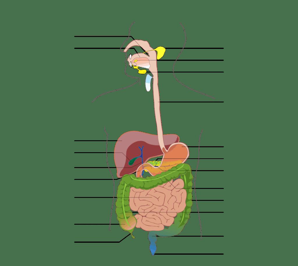 Nákres tráviaceho trávenia