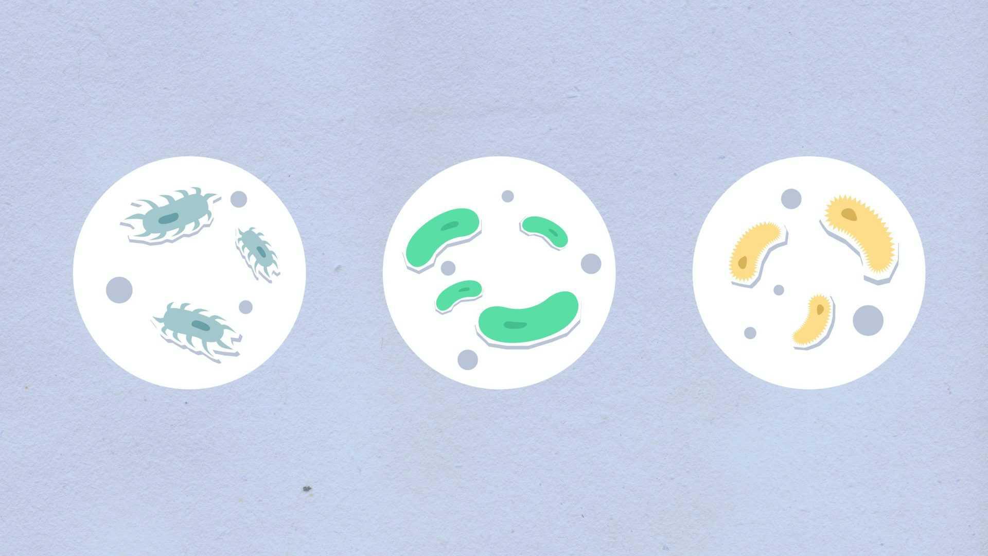 Zdravé črevo a mikrobióm tvorí základ imunity človeka