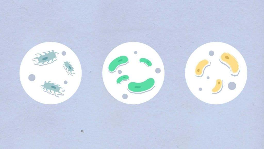Prírodné antibiotiká - účinky
