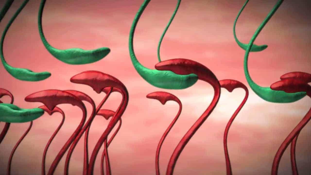 Mechanizmus pôsobenia baktérie Lactobacillus reuteri DSM17648 pri odstraňovaní helikobakter pylori.